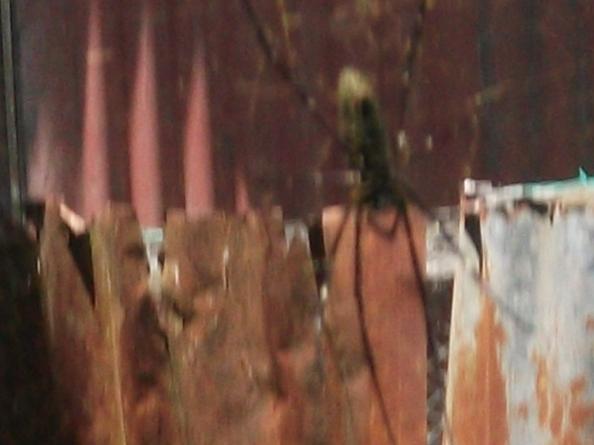 mungkin beginilah sarang labah-labah di pintu gua hira'